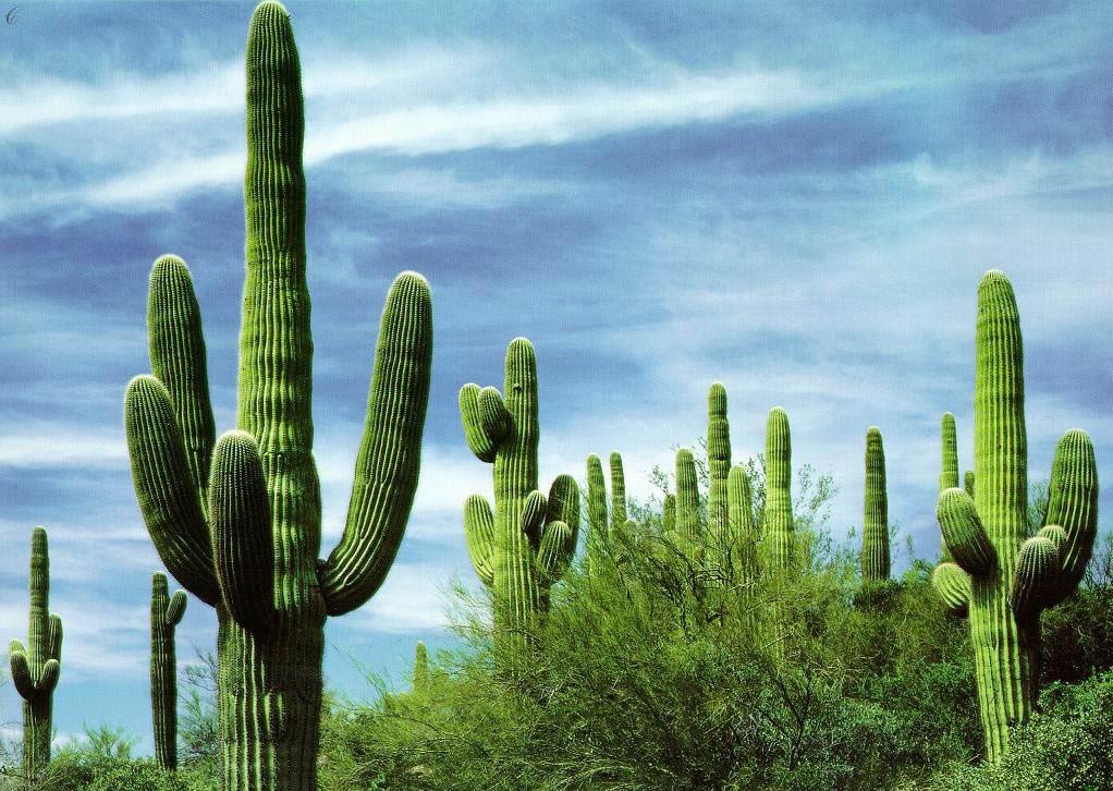 История названия агентства «Cactus»